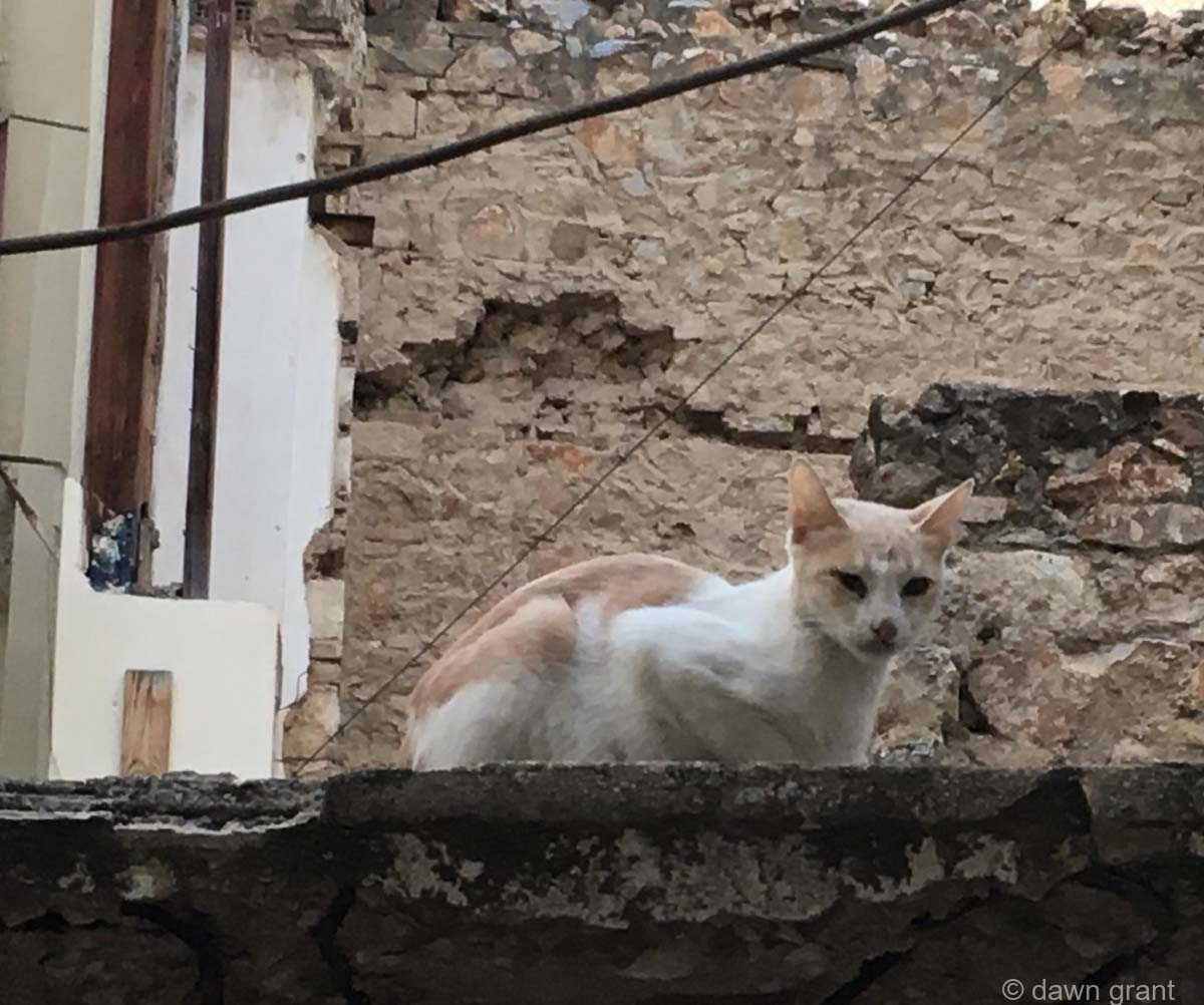 Scrawny and dirty white and orange cat sitting on top of a broken wall, with bricks visibly crumbling.